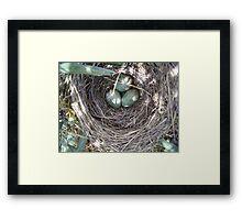 Nest in the forest Framed Print