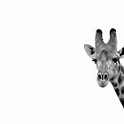 Giraffe by Clive  Wilson