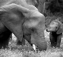 Mother and child by Clive  Wilson