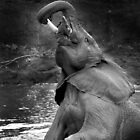 Elephant bath time by Clive  Wilson
