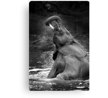 Elephant bath time Canvas Print