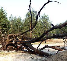 old fallen tree by Bonus