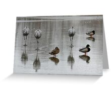 Sandhill Cranes On Ice, With Some Mallards Greeting Card