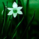 White in Greens by Ethem Kelleci