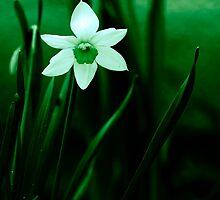 White in Greens by Ethem Kelleci