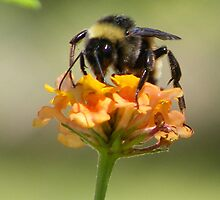 Helping with pollination by Christina Sauber