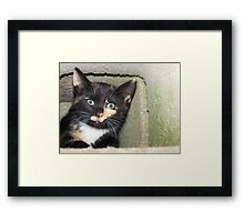 Hide n Seek  Framed Print