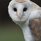 Barn Owl by barnowlcentre