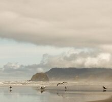Flock of Seagulls - Cannon Beach, OR by Nick Mann