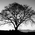 The big tree by Saverio Savio