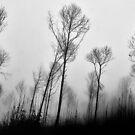 The mysterious forest by Saverio Savio