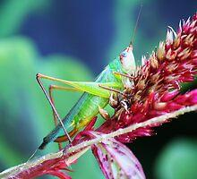 Pretty Grasshopper by Paulette1021