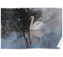 Lovely Swan Poster