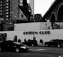 The Cotton Club by Sandy Taylor