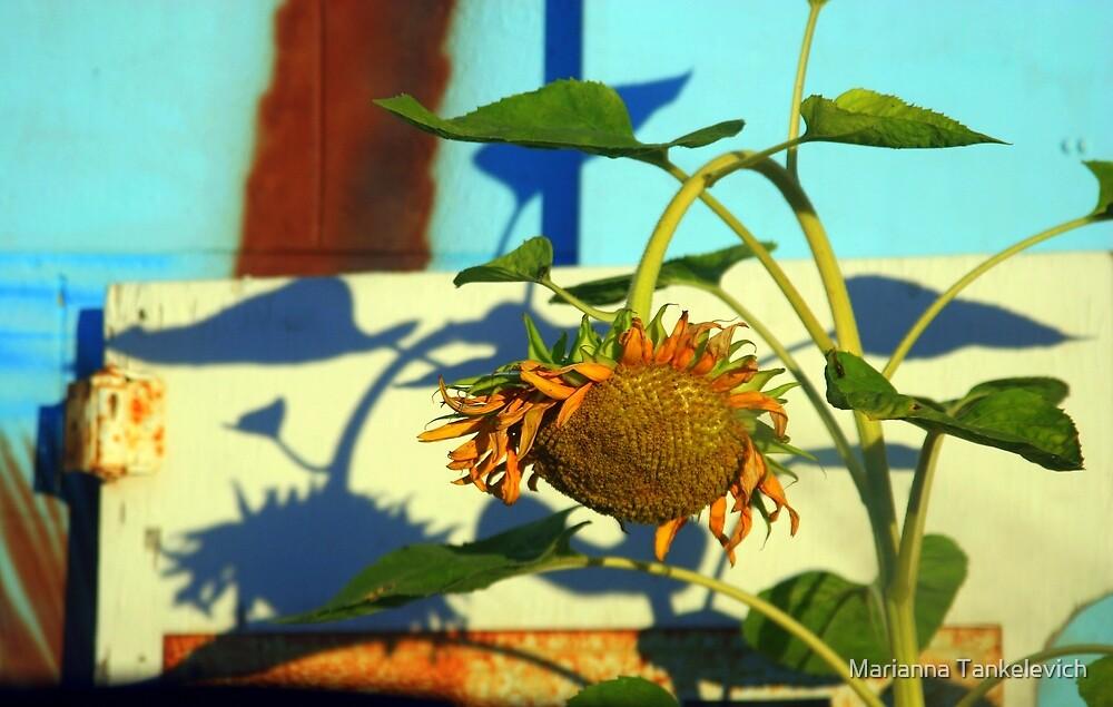 Sunflower by Marianna Tankelevich