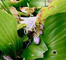 Bumble Bee by oxymoronic92