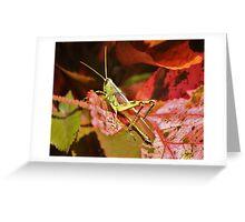Beautiful Grass Hopper Greeting Card