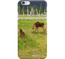 Playful baby moose iPhone Case/Skin