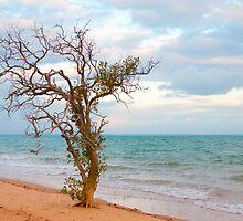 Arnhem Bay at Nyinyikay by Erik Schlogl