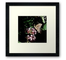 IN A SPOT OF SUN Framed Print