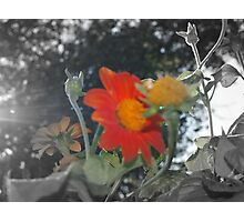 Just a Touch of Color!!! Photographic Print