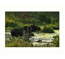Cow Moose In Bog Art Print