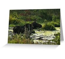 Cow Moose In Bog Greeting Card