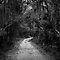 Pathways and Walkways ..... black & white