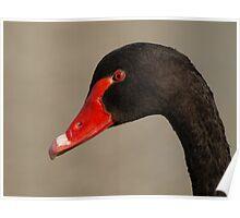 Black Swan Profile. Duh! Poster
