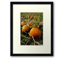 Down at the patch  Framed Print