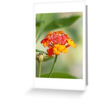 Native Lantana Greeting Card
