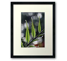 stargazing Framed Print
