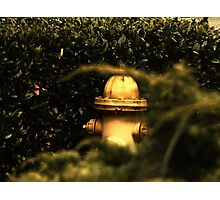 Yellow Fire Hydrant Photographic Print