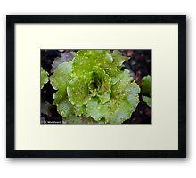 Baby Greens Framed Print