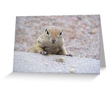 """Please feed me"" Ground squirrel  Greeting Card"