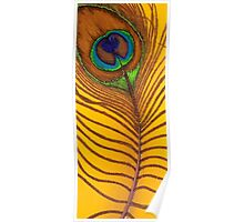 Cauda Pavonis Colourful Peacock Tail Feather Painting Poster