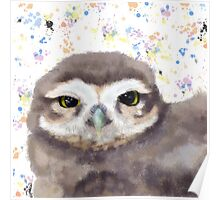 Little Owl (Burrowing Owl) Poster