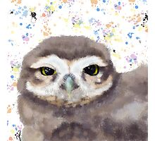 Little Owl (Burrowing Owl) Photographic Print