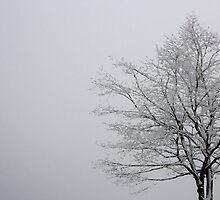 Snowy Tree by texasgirl