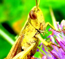 Grasshopper on common teasle Sticker