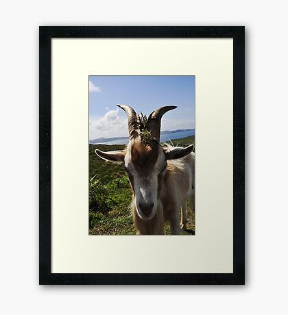 Billy theGoat Framed Print