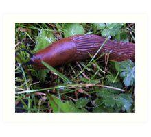 Slug looking for his friends Art Print