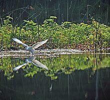 White Egret by RebeccaBlackman