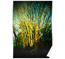 Branching Out Poster