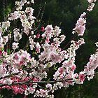 Spring Bluff by PhotosByG