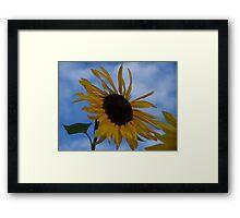 Sunflower (original) Framed Print