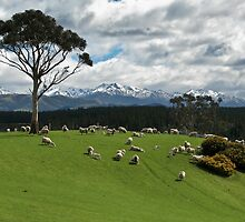 Southland, New Zealand by Kimball Chen
