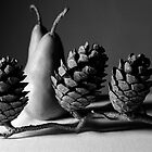 pears & pine cones by Janine Paris