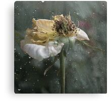 Rust 'n Roses ~ No 16 Canvas Print