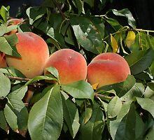 Peaches by Anina Arnott